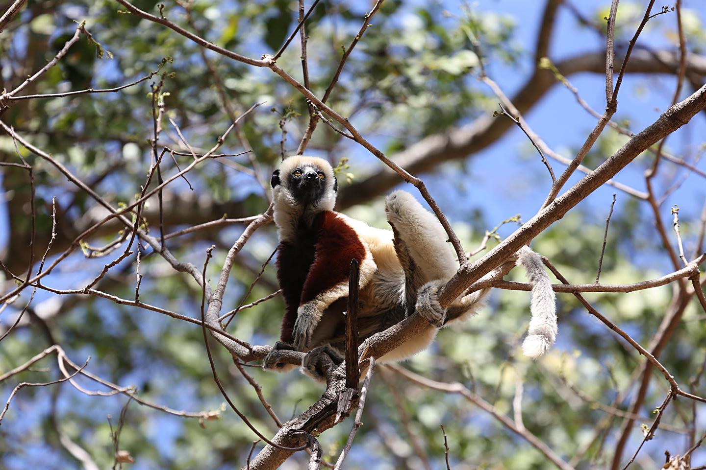 http://users.uoa.gr/~kgaze/images/Kosmas_Gazeas_Madagascar_11r.jpg