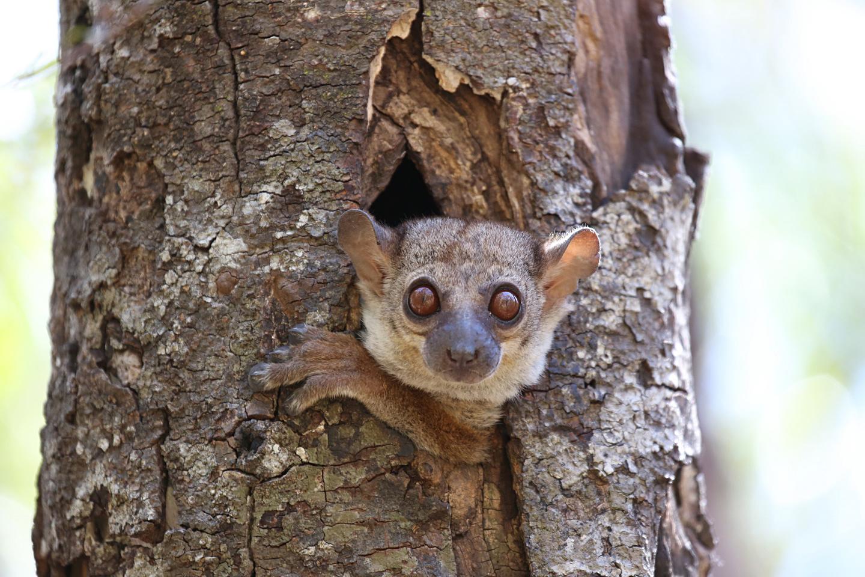 http://users.uoa.gr/~kgaze/images/Kosmas_Gazeas_Madagascar_14r.jpg